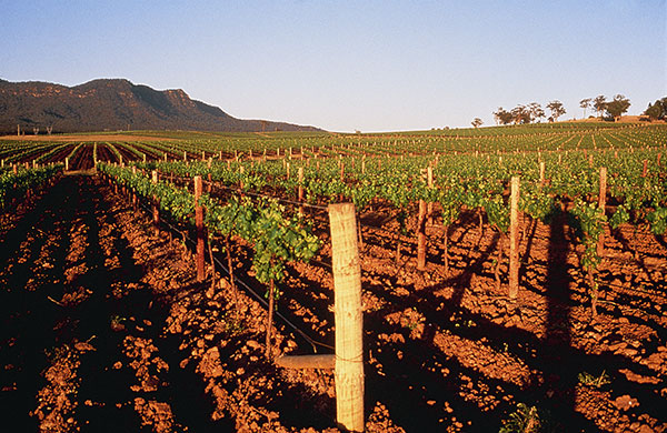 Agriculture - Winery